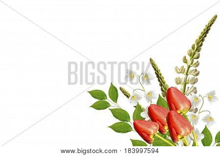 lupines beautiful flowers on a white background. jasmine