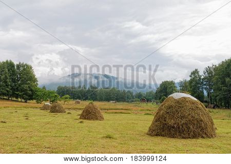 Mountain Altai. Skew hay collected in haystacks in a meadow