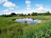 Landscape of grow plant crops and aquaculture natural fish ponds at outdoor garden in morning time at Phatthalung Thailand. poster