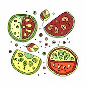 Set of vector hand drawn childish juicy fruits. Cute childlike watermelon with leaves seeds drops. Doodle sketch cartoon style. Line drawing. Graphic unusual illustration Bright colors poster