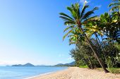 Beautiful green palm trees at tropical beach Palm Cove in Queensland, Australia poster