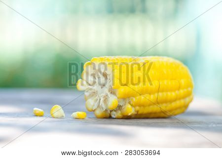 Boiled Corn Cob, Yellow Color Maize Seeds Macro View. Shallow Depth Field Close-up Photo, Selective