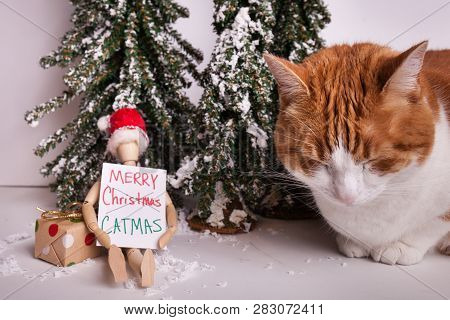 Merry Catmas Sign Held By Wooden Jointed Manikin Sitting Infront Of Wintery Scene Orange And White T