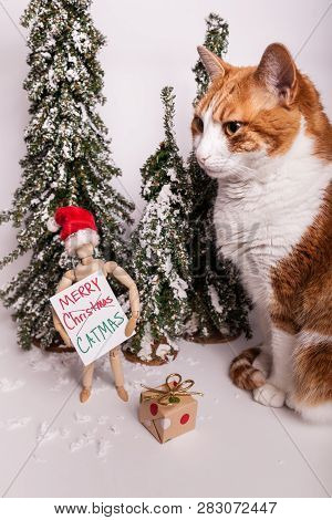 Tabby Cat Sitting Wooden Jointed Mannequin Doll Wearing Red Santa Pointed Hat Holding Merry Christma