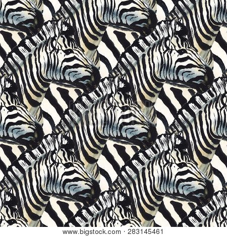 Seamless Pattern With Watercolor Image Of Zebra Like As Herd. Good Design For Wrapping Paper, Textil