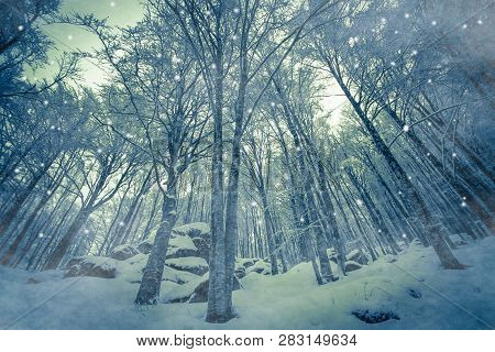 Magic Snowfall In The Enchanted Forest Of Mount Amiata In Tuscany