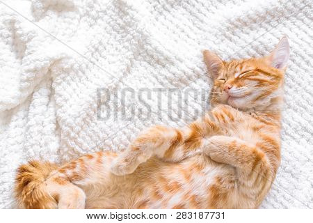 Ginger Cat Sleeping On Soft White Blanket, Cozy Home And Relax Concept, Cute Red Or Ginger Little Ca