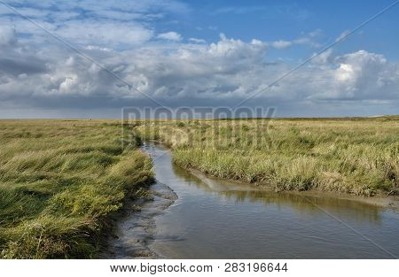 Salt Marsh At North Sea In North Frisia Near Westerhever Lighthouse,schleswig-holstein,germany