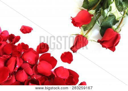 Rose Petals And Red Roses On White Background
