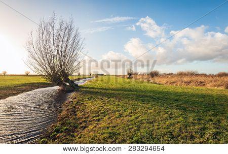 Backlight Image Of Skew Growing Pollard Willows In A Dutch Polder Landscape. The Phot Was Taken In T