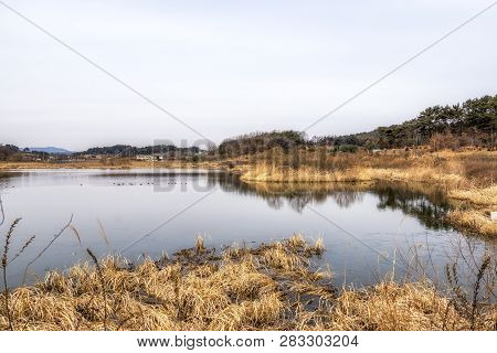 Younghwasil Pond And Reeds
