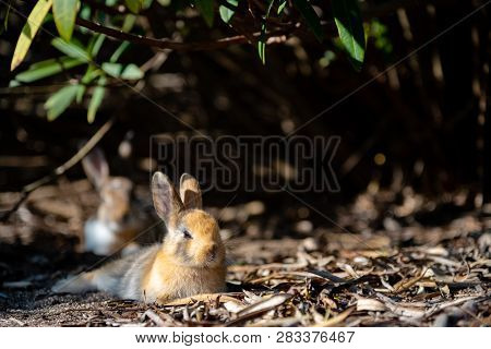 Cute Wild Rabbits On Image & Photo (Free Trial) | Bigstock