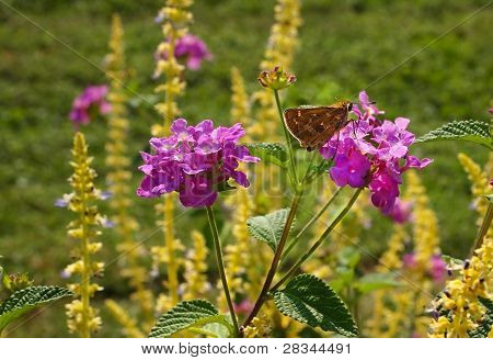 A fuzzy brown moth rests on a purple flower in the garden. poster