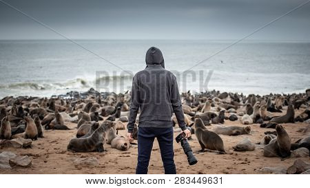 Hoodie Man Traveler And Photographer Standing Over Ten Thousands Fur Seals In Cape Cross, Skeleton C