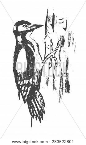 Woodpecker. Vector Hand Drawn Ink Illustration. Isolated Image. Sketch Of Artwork