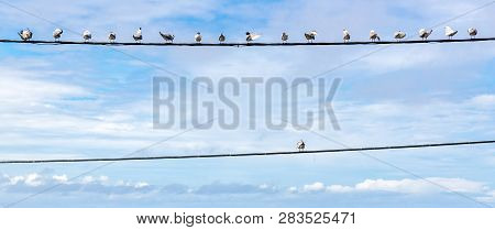 Individuality Symbol, Think Out Of The Box, Independent Thinker Concept, Group Of Pigeon Birds On A