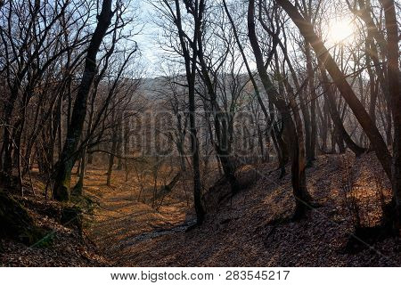 Spring Forest And Sun At Sunset, Close Up