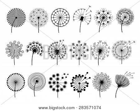 Dandelion Silhouettes. Herbal Illustrations Flowers Decoration Concept Vector Botany Illustrations.