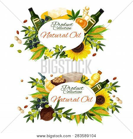Natural Cooking Oils Of Sunflower, Olive Or Linseed Flax And Peanut And Maize Corn Oil. Vector Extra