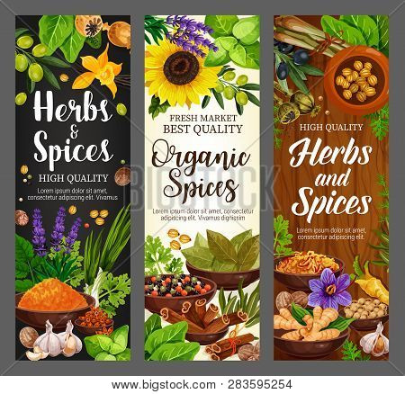 Cooking Spices Seasonings And Culinary Herbs Banners. Vector Organic Natural Herbal Flavorings Bay L
