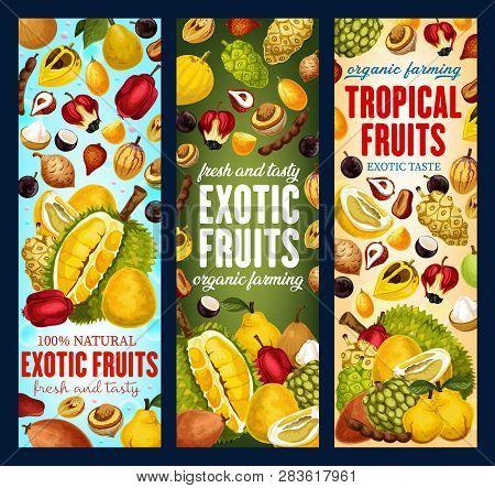 Exotic Tropical Fruits Banners. Vector Pandanus, Durian Or Persimmon And Tamarind, Sapodilla Or Cash