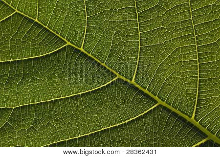 Extreme close up of green leave.