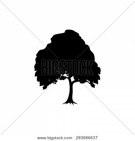 Detailed Vectoral Trees Silhouette.vector Illustration Isolated On White Background.  African, Tropi