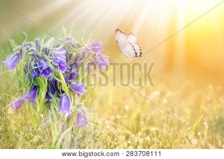Wild Meadow Blue Flowers And Butterfly On Morning Sunlight Background. Spring Field Background