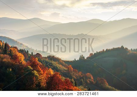 Beautiful Autumn Landscape In Mountains At Sunset. Trees In Red Foliage. Beams Of Light Fall In To T