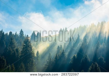 Fantastic Foggy Scenery In Autumn. Pine Forest On The Hillside At High Noon. Wonderful Sunny Weather