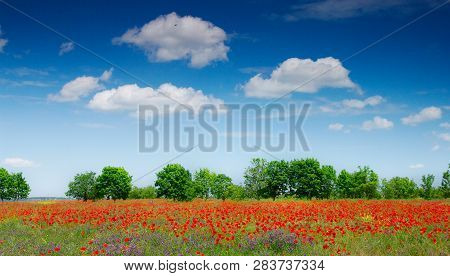 View Of Red Poppies In Summer Countryside.rural Landscape Of Poppies Field