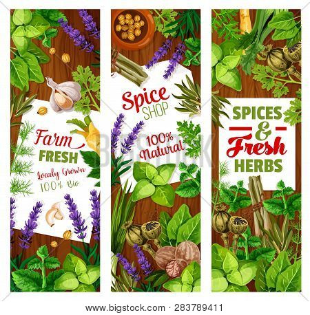 Spice And Herbs, Seasoning And Greenery, Cooking Condiments. Vector Cardamom And Ginger, Lavender An