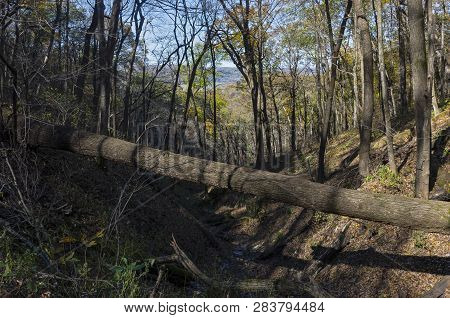 Woodlands And Ravine Of Wyalusing State Park In Driftless Region Of Southwestern Wisconsin