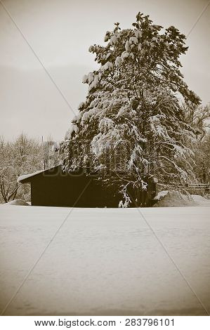 House And Trees In Snow In Winter
