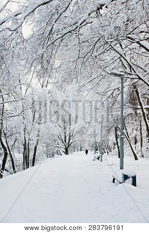 Street Lights And Trees In Snow In Winter