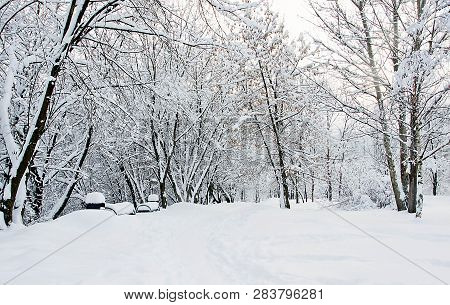 Benches And Trees In Snow In Winter Day