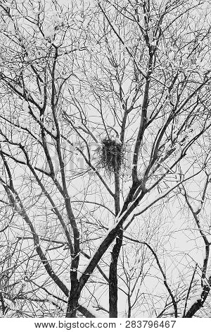 Nest On Tree Under The Snow In Winter Black And White
