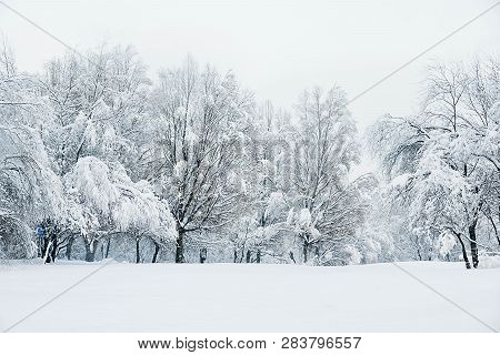 Trees Under Snow And Snowy Meadow In Winter