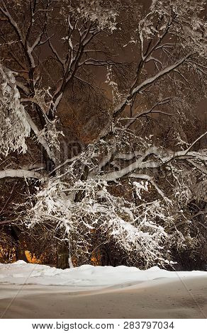 Trees And The Light Of Street Lamps In Winter