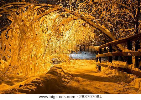 Trees Under Snow And Wooden Fence In Winter Evening