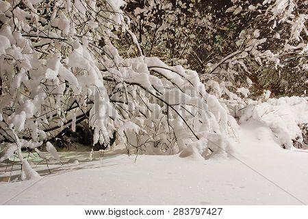 Snowy Shrubs In The Evening Winter Park