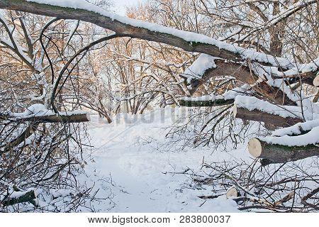 Path Under A Fallen Tree In A Winter Park