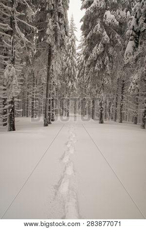 Snowshoes Steps On Snow In Winter Forest Bellow Slavic Hil Above Moravka Village In Moravskoslezske