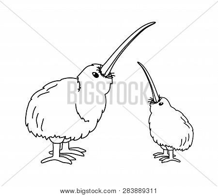 Kiwi Bird Animal Free Black White Clipart Images Clipartblack - Kiwi Bird  Clipart - Free Transparent PNG Clipart Images Download
