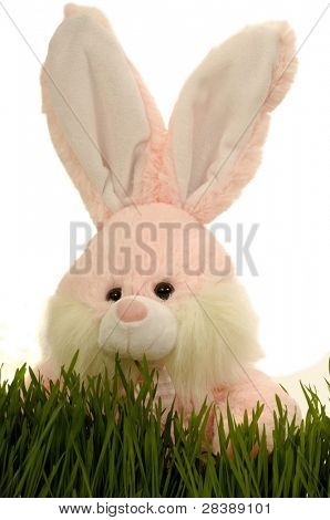 Easter bunny hiding in green grass, with a white background.