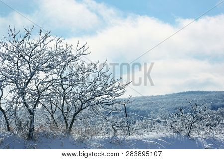 Ice and frost covered trees on a winter day