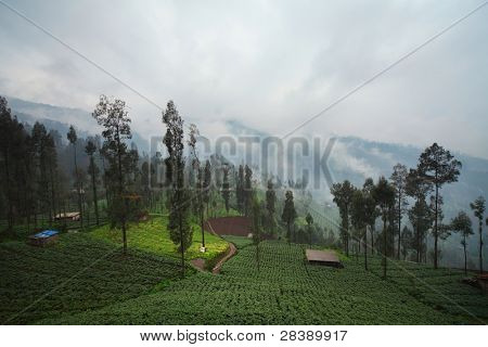 Cultivated land in a mountains. Java island Indonesia.