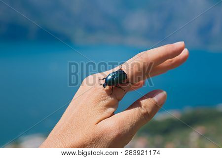 small rose chafer on a womans hand, blurry background outdoors poster