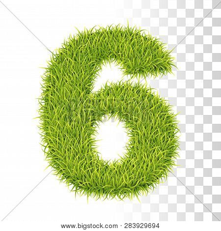 6. Vector Number Six Illustration. Fresh Green Grass Realistic Texture
