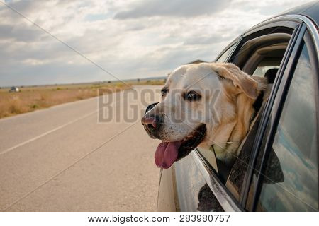 In The Image Can See A Dog Inside The Car With His Head Outside
